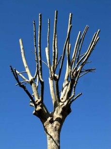hatrack tree